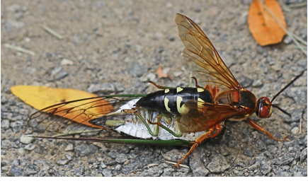 Cicada-Leora Willis-With This Ring I Thee Wedd Ceremonies